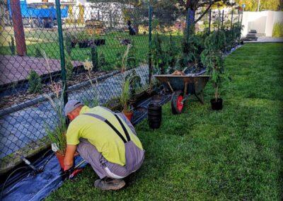 Realizacja ogrodów, nasadzanie roślin - Knurów, Vera Garden