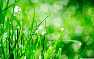 Hydrosiew a Zakładanie trawnika z siewu