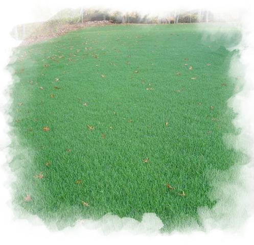 Hydrosiew Zakładanie Trawników Firma Ogrodnicza Vera Garden